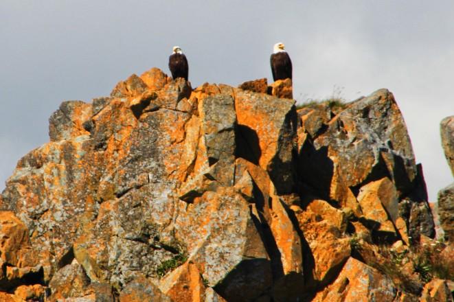 1 eagles