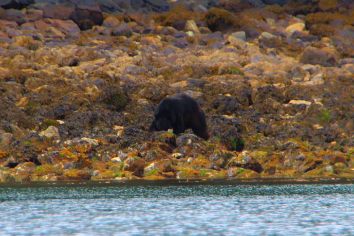 bear 2 digging