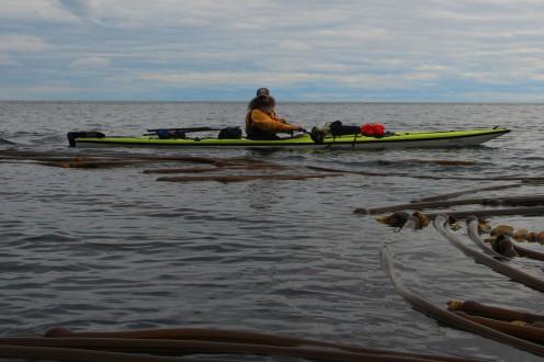 devjeet in kelp beds