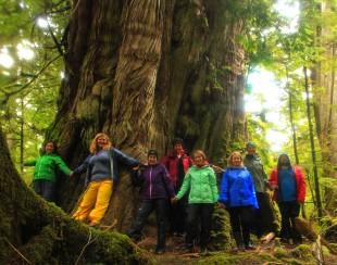 huge cedar nice