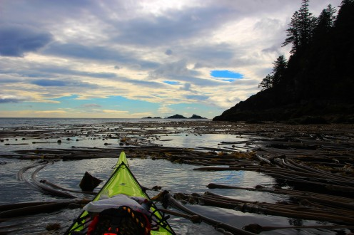 kelp beds paddle